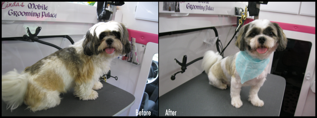 Pet Grooming Before & After Pics - Mickey De the Lhasa Apso